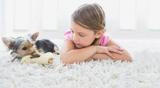 pet alergie mýty